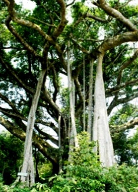 Cảnh đẹp bán đảo Sơn Trà