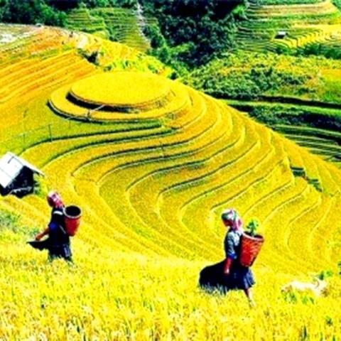 Đà Nẵng, Hà Nội, Hà Giang, Đồng Văn, Lũng Cú, Mèo Vạc, Hoàng Su Phì