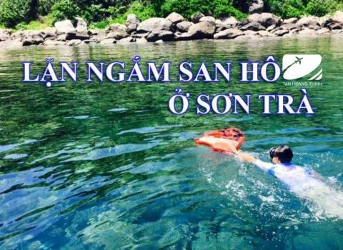 Lặn ngắm san hô Sơn Trà 1 ngày - Khuyến Mãi